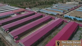 จีนตั้งโรงเรือนเลี้ยงไก่ในทะเลทรายโกบี ผลิตไข่ได้มากถึง 14,400 ตันต่อปี