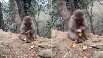 ละเอียดลออ เจ้าจ๋อนั่งแกะเปลือกส้ม ทำชาวเน็ตจีนชอบใจยกใหญ่