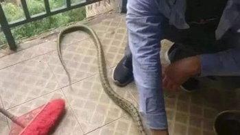 งูเลื้อยเข้าหอพัก นศ.จีนจับฟาด ถลกหนังหั่นชิ้นทำเป็นเนื้อตุ๋น