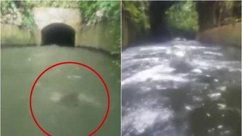 นางเงือกมีอยู่จริง? นักท่องเที่ยวเจอสิ่งมีชีวิตลึกลับแหวกว่ายในแม่น้ำที่เปอร์โตริโก