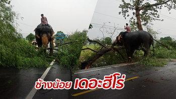น่ารัก! ช้างแสนรู้ลงจากรถบรรทุก ลากต้นไม้ใหญ่ขวางถนน เปิดทางให้ชาวบ้าน