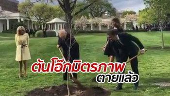 """ต้นโอ๊กแห่งมิตรภาพ """"ทรัมป์"""" ร่วมปลูก """"มาครง"""" ยืนต้นตายลงแล้ว"""