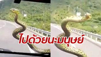 ระทึกกลางถนน งูร่วงจากฟ้าเลื้อยกระจกหน้ารถ คนขับใจนิ่งบึ่งรถต่อ 100 กม.