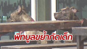 สยองขวัญ! หมาพิทบูลวิ่งหลุดจากร้านอาหาร รุมขย้ำเด็กชายเจ็บปางตาย