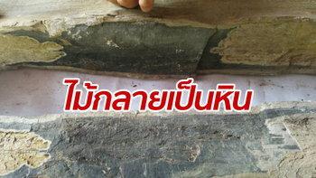 เลขเด็ดต้องมา! ไม้กลายเป็นหิน 200 ล้านปี ชาวบ้านแห่ขอหวย หวังรวยทั้งหมู่บ้าน