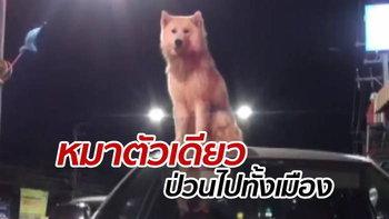 หมาพิลึกปีนหลังคารถ-ไม่ยอมลง จำใจเรียกตำรวจกล่อมเป็นชั่วโมง