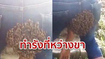 หนุ่มอินเดียเคราะห์ร้าย ผึ้งแห่บินทำรังตรงหว่างขา ขณะขับรถไปอู่ คาดกลิ่นดึงดูดนางพญา