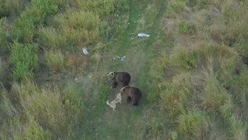 """ชาวโลกตื่นตา """"หมาเป็นเพื่อนหมี"""" นาทีคลอเคลียกลางป่าฉันท์มิตร"""