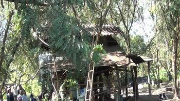 เจ้าของฟาร์มโคนมพลัดตกต้นไม้สูง 10 เมตร หัวโหม่งพื้นดับสยอง