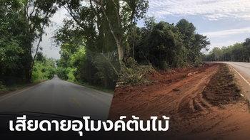"""ชาวบ้านเสียดาย """"อุโมงค์ต้นไม้ดงระแนง"""" ถูกทำลายเพราะขยายถนน"""