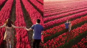 """""""แต้ว-ไฮโซณัย"""" จูงมือสวีทกลางทุ่งดอกไม้ที่เชียงใหม่ อย่างกับภาพพรีเวดดิ้ง"""