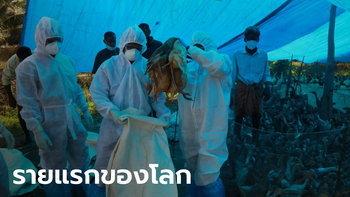 """รัสเซียพบผู้ติดเชื้อ """"ไข้หวัดนก H5N8"""" รายแรกของโลก ติดจากนกมาสู่คน"""
