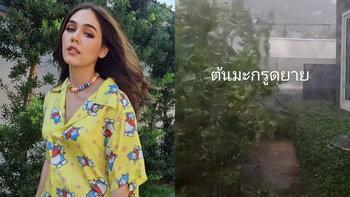 """""""ชมพู่ อารยา"""" ถ่ายคลิปนาที ฝน-ลูกเห็บ ถล่มบ้าน ลมแรงจน ต้นมะกรูด ของแม่ล้มต่อหน้า"""