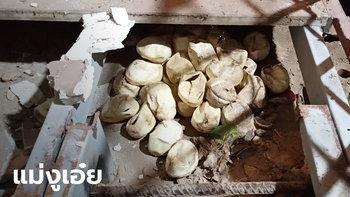 ขนลุกซู่ งูเหลือมลอกคราบทิ้งไว้ รื้อพื้นบ้านเจอไข่ฟักแล้ว 45 ฟอง เชื้อมาให้โชคลาภ