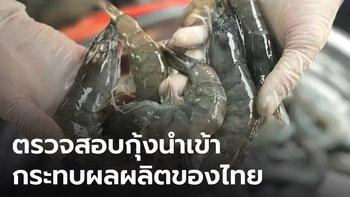 วอนตรวจสอบกุ้งนำเข้าจากเอกวาดอร์ หลังโผล่วางขายราคาถูก กระทบกุ้งไทย