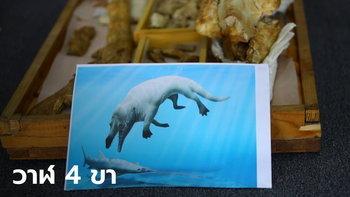 """อียิปต์พบฟอสซิล """"วาฬ 4 ขา"""" อายุ 43 ล้านปี ในทะเลทราย"""