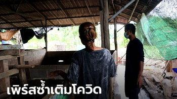 เกษตรกรนครพนม เจอโรคเพิร์สระบาด หมูตายนับ 100 ตัว ซ้ำเติมช่วงโควิด