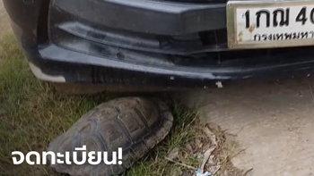 เต่าตัวใหญ่ซุกใต้ท้องรถ เชื่อมาให้โชคลาภ เปิดสถิติงวดที่แล้วก็ตรงเลขท้าย 2 ตัว