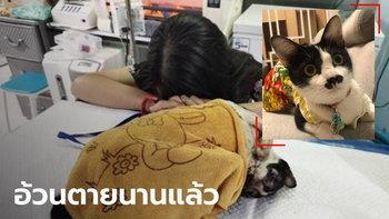 อ้วน แมวผู้ต้องหา ตายแล้ว สุดช็อกสัตวแพทย์แอบสับเปลี่ยนตัว อ้างแมวดังจะตายไม่ได้