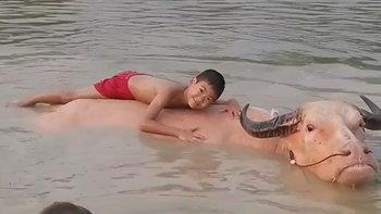 """""""น้องโอเชี่ยน"""" แช่น้ำกับฝูงควาย ตะโกนเรียก """"พ่อน้ำ รพีภัทร"""" ถ่ายรูปให้หน่อย (คลิป)"""