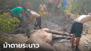 หัวหินก็เจอ! ม้าชายหาดป่วยตาย 6 ตัวรวด อาการเหมือนม้าที่ตายที่โคราช