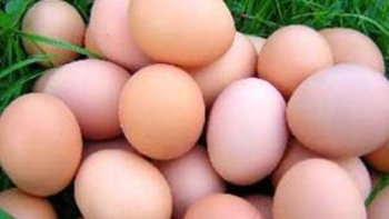 ตลาดรังสิตจัดขายไข่ไก่ราคาถูก