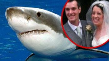 ฮันนีมูนสยอง! ฉลามบุกขย้ำคู่รักเมืองผู้ดี