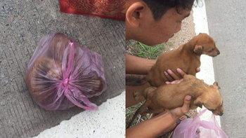 ช่วย 2 ลูกหมา ถูกจับใส่ถุงมัดปากแน่น หวิดขาดอากาศตาย