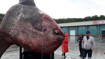 ฮือฮา! ชาวประมงรัสเซียจับได้ปลายักษ์ หนักกว่า 1 ตัน