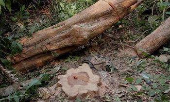 สลด! ฆ่าหมา 14 ชีวิต หวังลอบตัดไม้พะยูงเก่าแก่