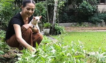 เปิดมุมบ้านหรูของ กบ ปภัสรา ขุดดินปลูกผักกินเอง