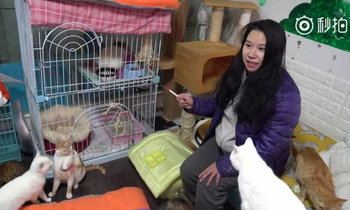สาวจีนช่วยแมวกว่า 600 ตัว เผย เจ็บปวดที่สุดตอนทำได้แค่มองมันตาย