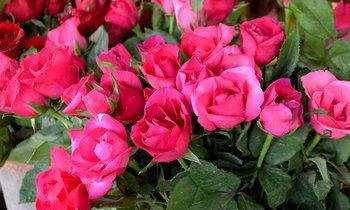 """พุ่งพรวด ราคาดอกกุหลาบขยับขึ้นรับ """"วาเลนไทน์"""" พรุ่งนี้"""