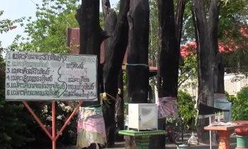 กลองยาวแก้บนแม่ตะเคียน 9 ต้น นักเสี่ยงโชคถูกหวยติดต่อหลายงวด