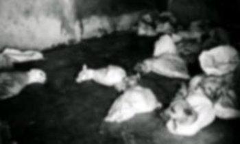 เผยอินโดนีเซีย ฆ่าหมาจรจัดนับแสนตัว ก่อนจัดซีเกมส์