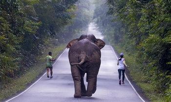 เกือบไม่รอด! 2 นักวิ่งชะล่าใจ ถูกช้างป่าเขาใหญ่ไล่ตาม ขณะยกกล้องถ่ายเซลฟี่