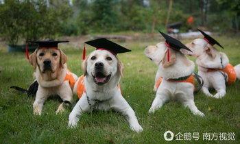 เผยภาพน่ารัก เจ้าตูบเข้าพิธีจบการศึกษาสุนัขนำทาง