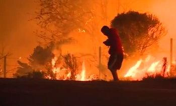 เอาใจช่วย หนุ่มจอดรถช่วยกระต่ายออกจากไฟป่า ทั้งร้อนทั้งรน