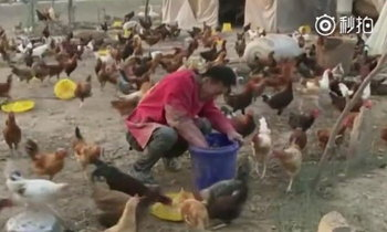 หนุ่มจีนพิการทางสมอง ขอทำภารกิจเลี้ยงไก่ตอบแทนย่า