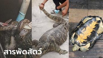 สาวแทบช็อก! น้ำท่วมเจอสารพัดสัตว์เข้าบ้าน ตัวเงินตัวทอง งูเหลือม งูเห่า เต่ายักษ์