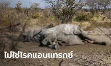 """ช้างตายปริศนากว่า 300 ตัว ในบอตสวานา คาดแหล่งน้ำมีเชื้อ """"ไซยาโนแบคทีเรีย"""""""