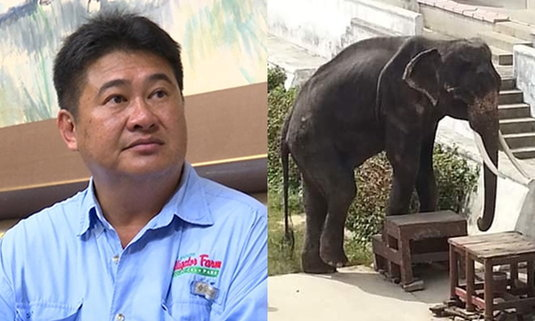 เจ้าของฟาร์มงัดใบตรวจสุขภาพยัน ดูแลสัตว์อย่างดี แจงภาพช้างผอมเพราะต้องแสดงโชว์