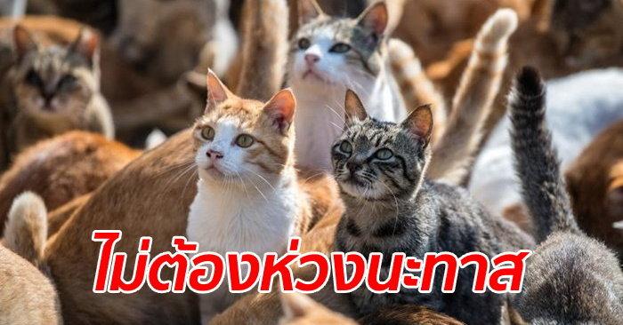 """ทาสแมวหายห่วง รัฐบาลสั่งดูแล """"เกาะแมว"""" ต้อนเหมียวหลบภัยพายุไต้ฝุ่นฮากิ ..."""