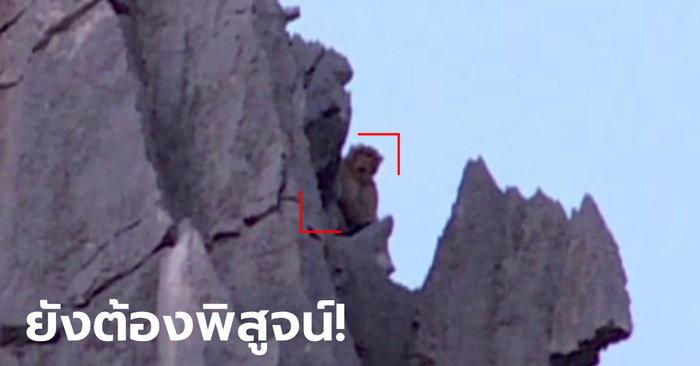 ฮือฮา! พญาวานรโผล่เขาหน่ออีกรอบ กรมอุทยานฯ แจงเคยเจอแต่ลิงแสมหนัก ...