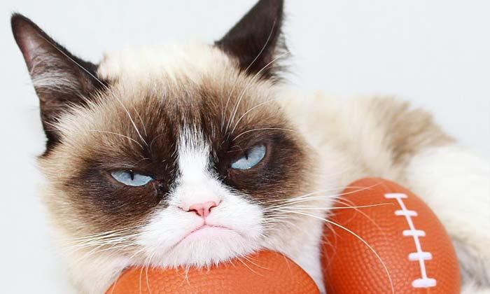 กรัมปี้แคต เซเลบแมวหน้าบึ้ง ลาโลกแล้วด้วยวัย 7 ปี