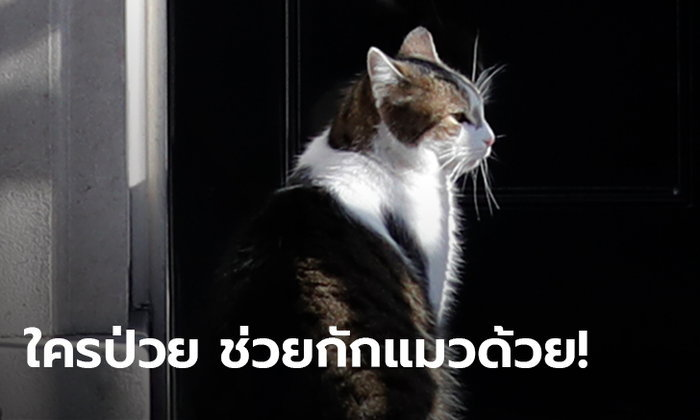 สัตวแพทย์เตือนเจ้าของแมว ไม่อยากแพร่โควิด-19 ให้กักสัตว์เลี้ยงไว้ในบ้านด้วย!