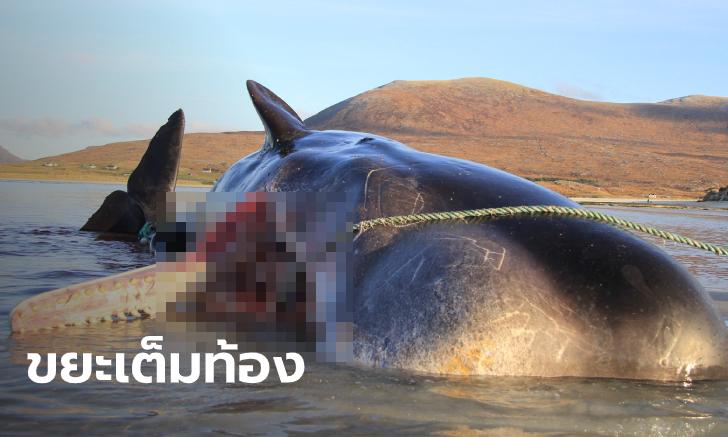 วาฬหัวทุย ตายอนาถริมหาด ผ่าท้องถึงกับผงะ! พบอวน-ขยะพลาสติก นับ 100 กิโลกรัม