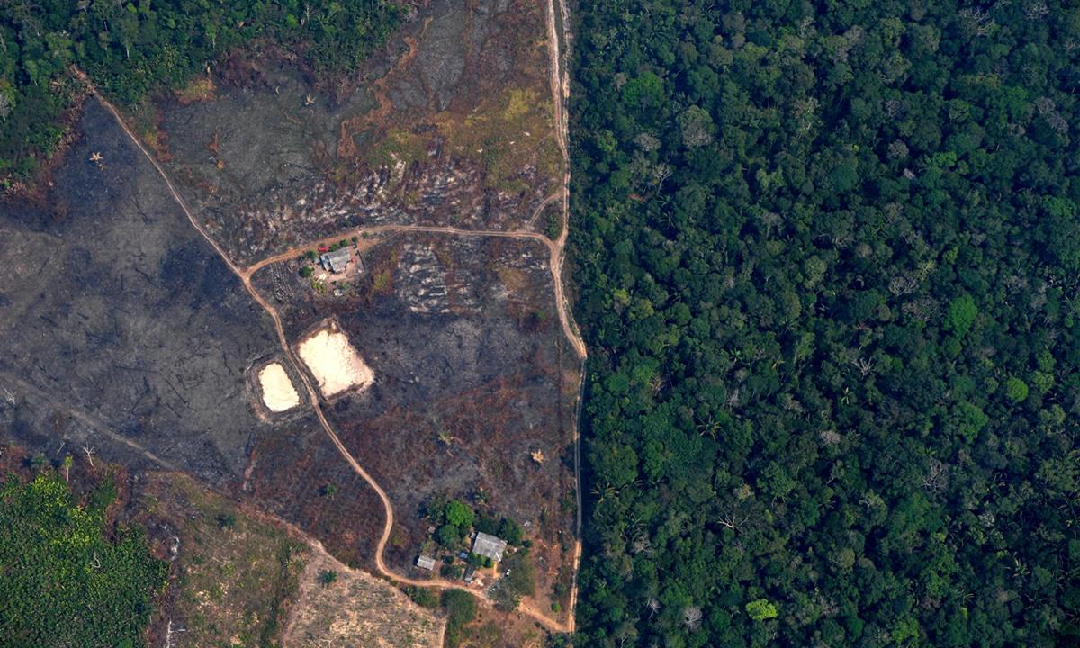 """WWF – WHO ยัน """"หาประโยชน์จากธรรมชาติในทางที่ผิด"""" ส่งผลให้เกิดโรคระบาดใหญ่"""