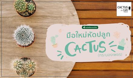 มือใหม่หัดปลูก Cactus (กระบองเพชร)