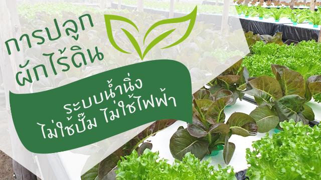 การปลูกผักไร้ดิน ระบบน้ำนิ่ง ไม่ใช้ปั๊ม ไม่ใช้ไฟฟ้า